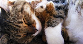 dormir plácidamente