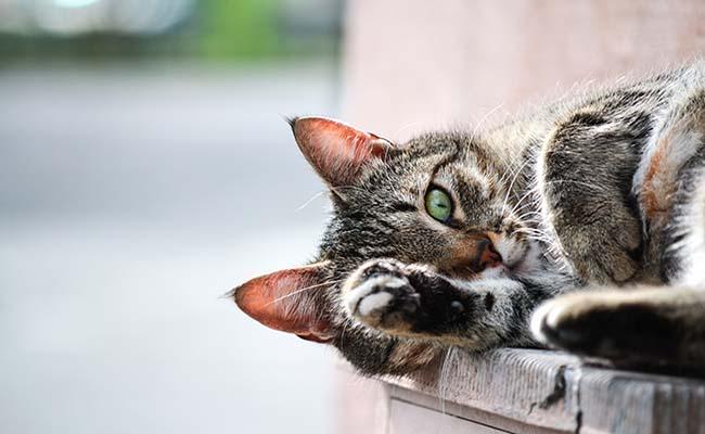 50 Frases De Gatos Que No Desearas Perderte