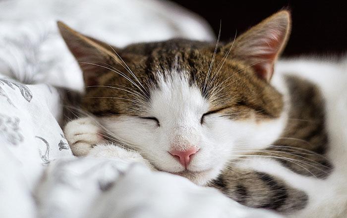 los gatos personals Los gatos online dating for los gatos singles 1,500,000 daily active members.