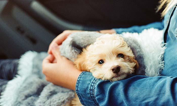 80 Hermosas Frases Sobre Perros