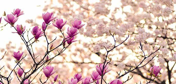 70 Frases Sobre La Belleza De La Vida Y La Naturaleza