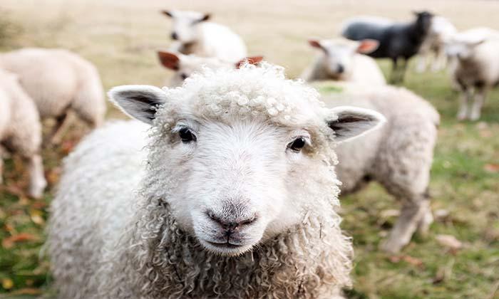 50 Frases Veganas Y De Amor A Los Animales