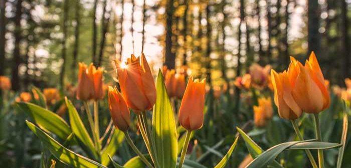 60 Preciosas Frases Sobre Las Flores Para Dar Color A Tu Dia