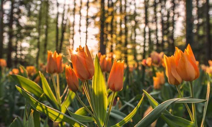 60 Preciosas Frases Sobre Las Flores Para Dar Color A Tu Día
