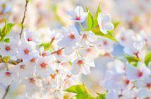 Frases de primavera
