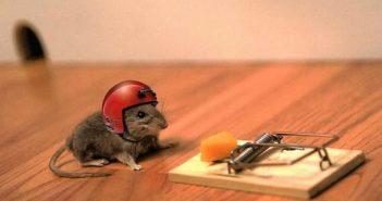 El poder de la determinación