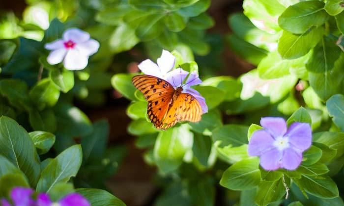 30 Frases Sobre Las Mariposas Para Entender El Cambio