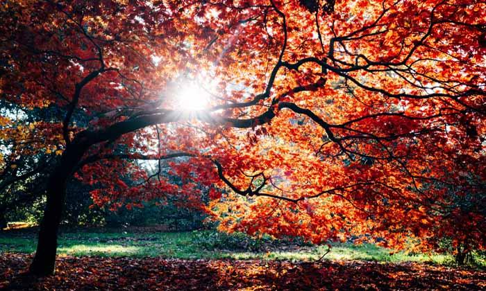 Frases de otoño
