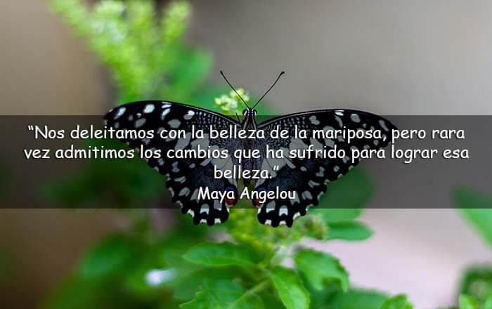frases sobre las mariposas