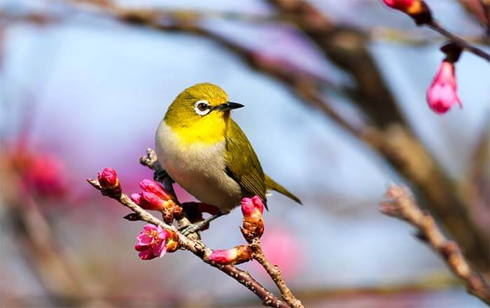 frases sobre los pájaros