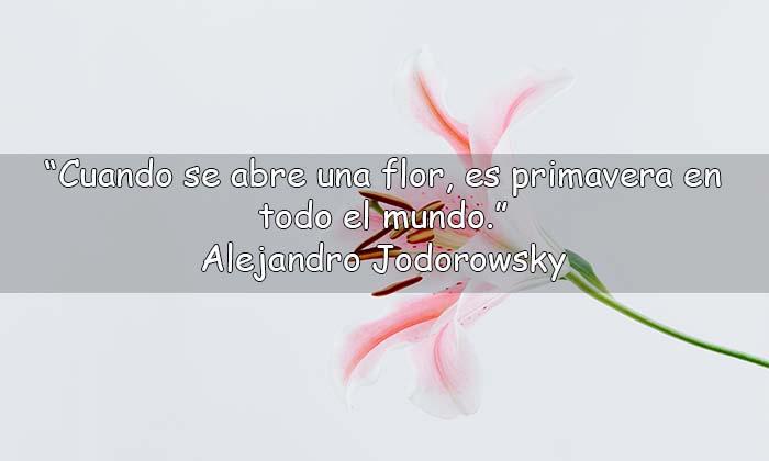frases de flores